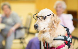 Pet Therapy Benefits blog rehabilitation rehab nursing home forest hills queens ny