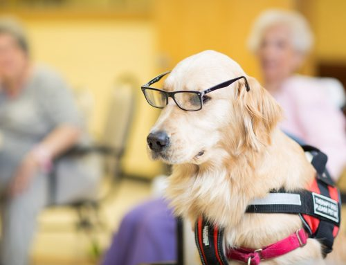 Pet Therapy Benefits for the Elderly