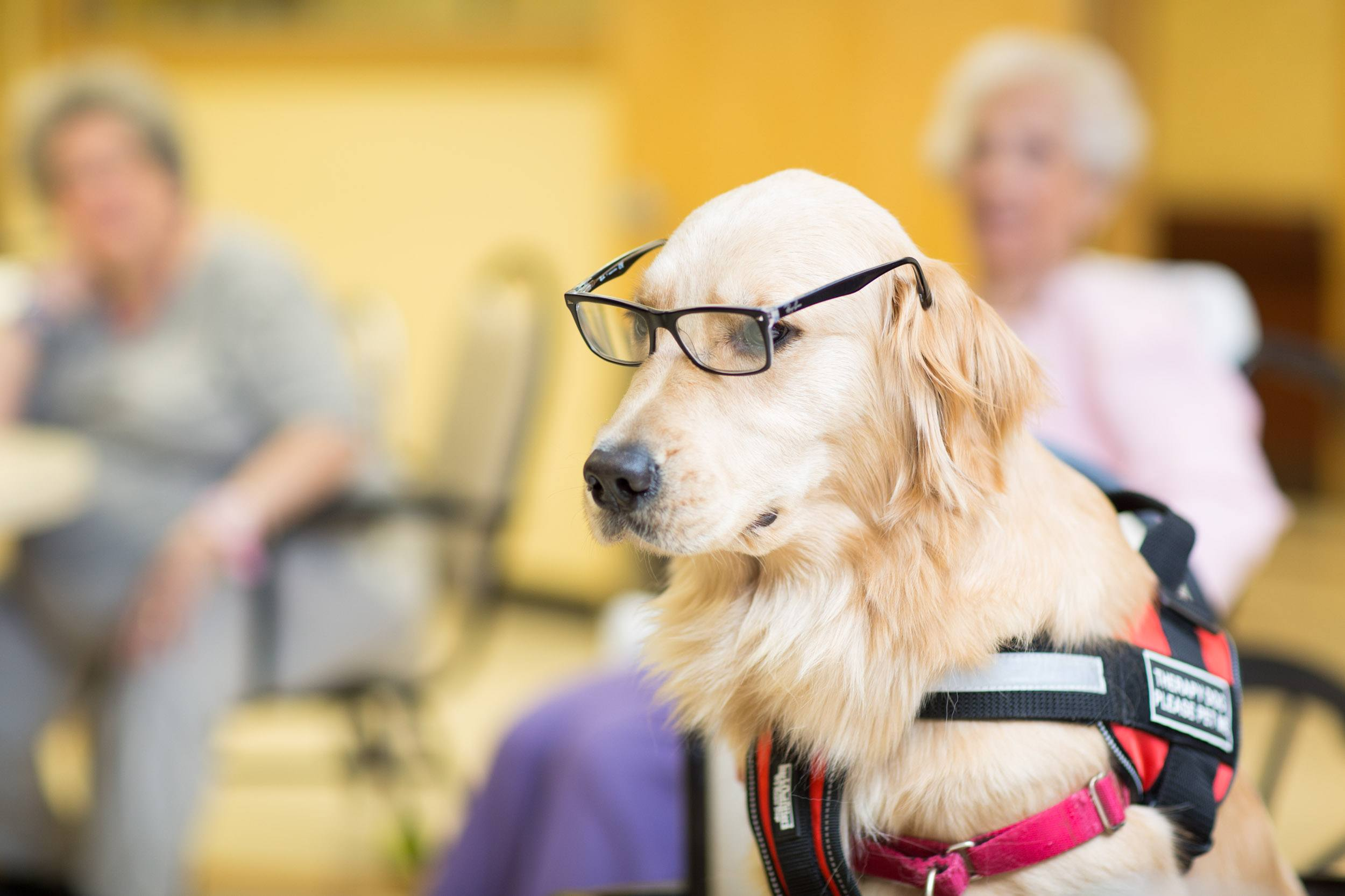 the helpful benefits of pet therapy 2018-10-11  pet therapy for seniors, also known as animal assisted therapy, is a technique that uses animals to interact with seniors for numerous reasons to help improve their quality of life studies show that just fifteen minutes spent bonding with an animal promotes hormonal changes within the brain.
