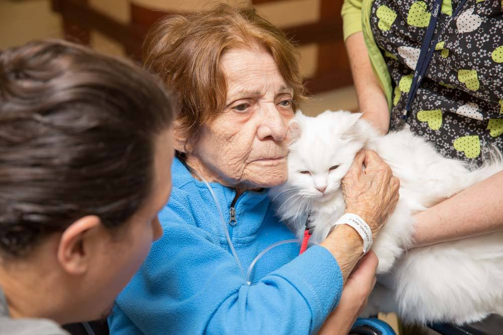pet therapy at fairview nursing care center forest hills