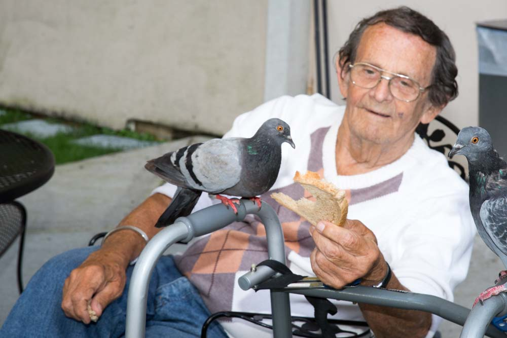 Elderly man playing with pigeon to beat fatigue
