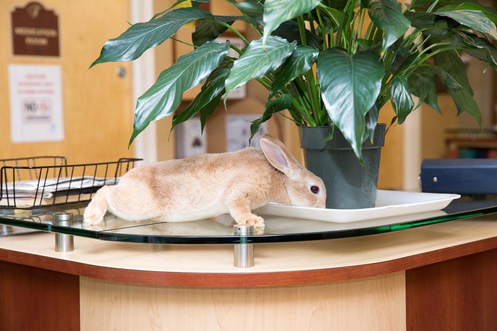 Adorable rabbit bringing joy to boost health