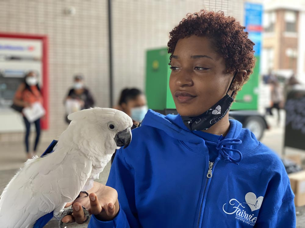 Recreation nurse specializing in fun activities holding White cockatoo on her hands
